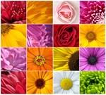 Фотообои DIVINO DECOR B-098 Цветы микс  300х270см - фото 15686
