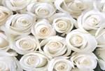 Фотообои DIVINO DECOR B-101 Розы белые 400х270см - фото 15694