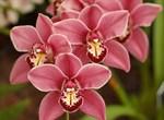 Фотообои DIVINO DECOR C-319 Орхидея 2 200х147см - фото 17159