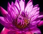 Фотообои DIVINO DECOR C-386 Яркий цветок 300х238см - фото 17303