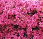 Фотообои DIVINO DECOR C-152 Стена цветов 300х270см - фото 17624