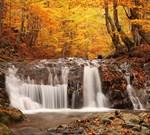 Фотообои DIVINO DECOR C-095 Осенний лес 300х270см - фото 18075