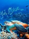 Фотообои DIVINO DECOR C-211 Морская черепаха 200х270см - фото 18680