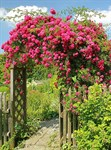 Фотообои DIVINO DECOR D-073 Ворота в сад 200х270см - фото 18762