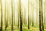 Фотообои DIVINO DECOR D-066 Весеннее утро в лесу 400х270см - фото 19630
