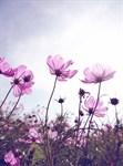 Фотообои DIVINO DECOR E-004 Полевые цветы 200х270см - фото 21238