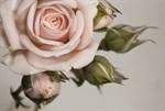 Фотообои DIVINO DECOR L-064 Крупная роза 400х270см - фото 24587