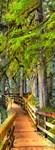 Фотообои DIVINO DECOR L-030 Дорога в лесу 100х270см - фото 24826